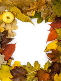 Frame of beautiful autumn fallen leaves. In corner of apple Royalty Free Stock Image