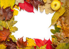 Frame of beautiful autumn fallen leaves. In corner of apple Royalty Free Stock Images