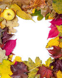 Frame of beautiful autumn fallen leaves. In corner of apple Stock Images