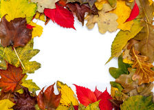 Frame of beautiful autumn fallen leaves Royalty Free Stock Image