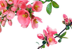 Frame of beautiful flowers Stock Images