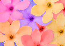 Frame of a beautiful flowers Stock Photo
