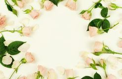 Frame of beautiful pale pink roses on a white background.Holiday concept. Copy space. Top view Royalty Free Stock Photo