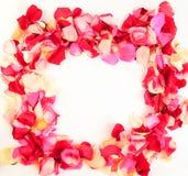 Beautiful petals of roses Royalty Free Stock Photos
