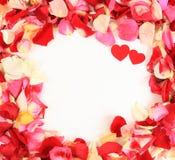 Beautiful petals of roses Royalty Free Stock Images