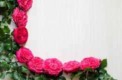 Frame of beautiful roses Royalty Free Stock Image