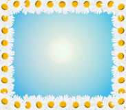 Frame from beautiful white chamomiles Royalty Free Stock Photo