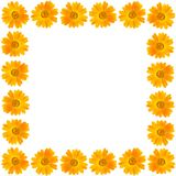 Frame of beautiful yellow flower on white background Royalty Free Stock Images