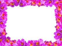 Frame of Beauty Pink Orchids Stock Image
