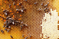 Frame with bee honeycombs Stock Photo