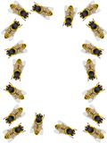 Frame from bees. On a white background Stock Image