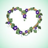 Frame of bindweed. In a shape of heart Royalty Free Stock Photo