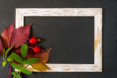 Frame from birch bark, red and green leaves with berries of bria Stock Photography