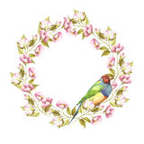 Frame with a bird and a sprig.Gouldian Finch. Watercolor illustration. Frame with a bird and a sprig.Gouldian Finch. Watercolor illustration Royalty Free Stock Photos