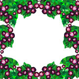 Frame with black currant, Royalty Free Stock Photos