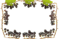 Frame with black currant Royalty Free Stock Photos