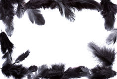 Frame of black feather Royalty Free Stock Photo
