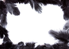 Frame of black feather Stock Photo