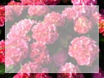 Frame bloemenachtergrond Stock Afbeelding