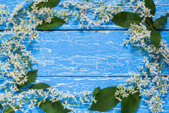Frame from blooming branches of bird cherry Stock Photos