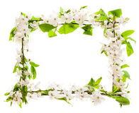 Frame with blossoming cherry branches Stock Photos