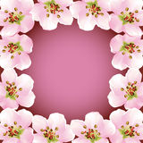 Frame with blossoming sakura - japanese cherry tre Stock Image