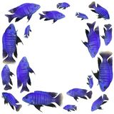 Frame with blue fish. Frame with bright blue fish Royalty Free Stock Photography