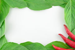 Frame bonito do legume fresco Foto de Stock