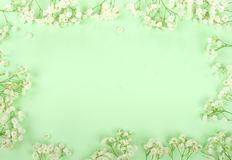 Frame border bouquets of a white gypsophila flowers on a pale green mint background. Top view. copy space. Holiday concept. Pastel colors stock images