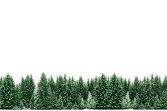 Pine trees forest of green spruces covered by fresh snow during Winter Christmas time as wide frame border background. Frame border of green spruce pine trees royalty free stock image