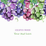 Frame border, template for postcard with the purple, violet, green and blue branches of grapes painted in watercolor. On a white background, greeting card Stock Photos