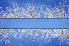 Frame borders from snow covered  branches against a blue snowy b Stock Photography