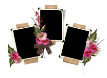 The frame with a bouquet of flowers hollyhocks. Stock Photos