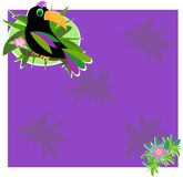 Frame Box with Toucan and Hibiscus Stock Image