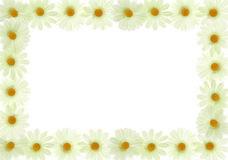 Frame box from white flowers Royalty Free Stock Photography
