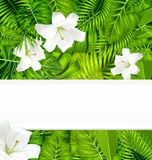 Frame branch tropical leaves and white flowers lily Royalty Free Stock Image