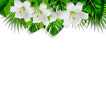 Frame branch tropical leaves and white flowers lily Stock Photos