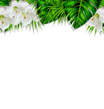Frame branch tropical leaves and white flowers lily Stock Photography