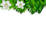 Frame branch tropical leaves and white flowers lily Royalty Free Stock Photo