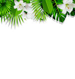 Frame branch tropical leaves and white flowers lily Stock Image