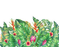 The frame of the branches with purple Protea flowers, hibiscus and tropical plants. Hand drawn watercolor painting on white background Royalty Free Stock Photos