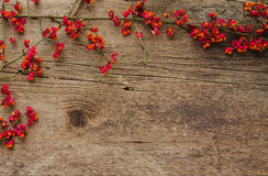 Frame of branches with red flowers on a wooden background Royalty Free Stock Photos