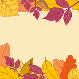 Frame with bright autumn leaves-01. Frame with bright autumn leaves on a light background.Greeting card with place for text.Vector illustration royalty free illustration