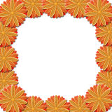 Frame from brown flowers on white background Royalty Free Stock Images