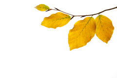 Frame of brunch  leaves with place for your text. Photo taken 05. november 2014 Royalty Free Stock Images