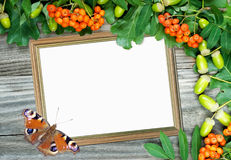 Frame with bunch of mountain ash and butterfly stock photography