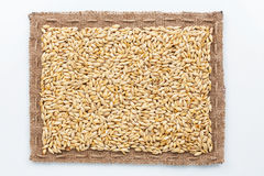 Frame of burlap and  barley in beans Stock Photography