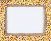Frame of burlap and corn  beans Stock Image
