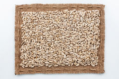 Frame of burlap and  sunflower seeds Stock Photography