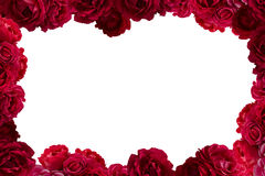 Frame with bush of red rose flowers background isolated Stock Image